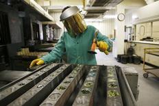 Un trabajador golpea vidrios para formar botones tomados de un horno en un laboratorio en Newmont, en la minería Carlin cerca de Elko, Nevada, 21 de mayo de 2014. El número de estadounidenses que solicitó el seguro estatal de desempleo la semana pasada bajó más de lo previsto, apuntando a un fortalecimiento de las condiciones del mercado laboral. REUTERS/Rick Wilking