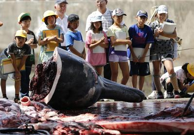 Whaling and Japan