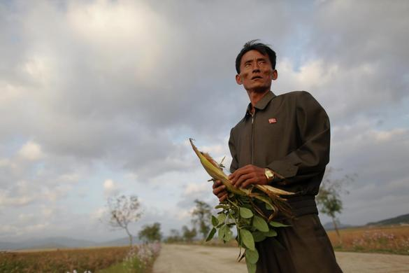 Pak Su Dong, manager of a cooperative farm hit by floods and typhoons shows damage to crops in South Hwanghae province, September 29, 2011.  REUTERS-Damir Sagolj