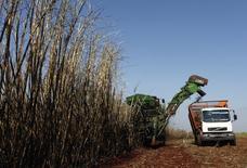 A consultoria Platts Kingsman elevou sua projeção de déficit global de açúcar na temporada 2014/15, entre outubro de setembro, para 2,1 milhões de toneladas, ante previsão anterior de 239 mil toneladas. 13/05/2011 REUTERS/Rodolfo Buhrer/La Imagem
