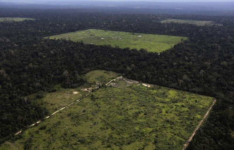 Amazon rainforest grew after climate change 2,000 years ago