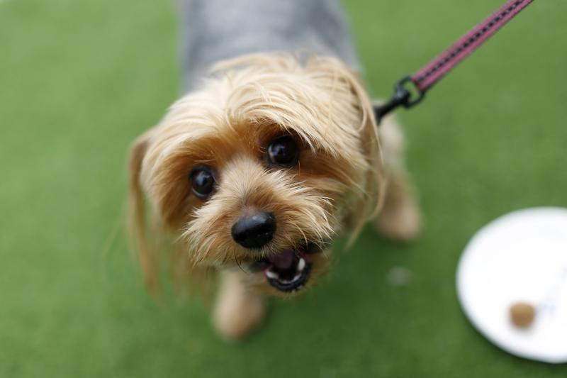 It's 'bone-appétit' for California pooches under new law