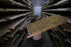 A worker places ginseng on a shelf at a ginseng processing factory in Baishan, Jilin province, September 22, 2014. REUTERS/Stringer