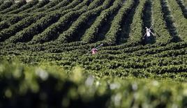 Unos trabajadores en un cafetal en Santo Antonio do Jardim, Brasil, feb 6 2014. El pronóstico de lluvias que traería alivio a las áreas productoras de caña de azúcar y café arábigo en Brasil en los próximos 15 días se deterioró y ahora se estima que la mitad de esas regiones permanecerían secas, dijo el miércoles el Commodities Weather Group (CWG) con sede en Estados Unidos.  REUTERS/Paulo Whitaker