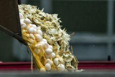 Uma escavadeira é usada para dispensar ovos e aves em um contâiner numa fazenda onde foi identificada a presença de uma cepa de gripe aviária, em Hekendorp, na Holanda. 17/11/2014. REUTERS/Marco De Swart