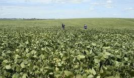 Agrônomos inspecionam plantação de soja em Cruz Alta, Rio Grande do Sul. 29/02/2008. REUTERS/Inae Riveras