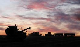 Комбайн убирает пшеницу в селе Солгон в Красноярском крае. 6 сентября 2014 года. Россия может собрать 85-95 миллионов тонн зерна в новом маркетинговом году, сказал в пятницу глава Института конъюнктуры аграрного рынка (ИКАР), назвав свой прогноз умеренно оптимистичным. REUTERS/Ilya Naymushin