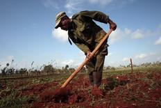 Un obrero en una cultivo en La Lisa en las afueras de La Habana, mar 28 2014. La cosecha azucarera cubana de este año se ubica hasta ahora un 7 por ciento debajo de la meta de 1,8 millones de toneladas, pero las autoridades todavía ven posibilidades de cumplir el objetivo antes de que culmine el período en mayo, informaron  medios estatales.  REUTERS/Stringer/Cuba