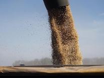 Granos de soja siendo cargados en un camión en Chacabuco en Argentina, abr 24 2013. La Bolsa de Comercio de Rosario subió el miércoles a un récord de 59,6 millones de toneladas su estimación para la cosecha de soja de Argentina de la temporada 2014/15, desde los 59 millones estimados el mes pasado, gracias a los altos rendimientos del grano.         REUTERS/Enrique Marcarian