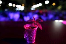 A cannabis plant is pictured during a gathering demanding the legalisation of cannabis in Athens' Syntagma Square, May 9, 2015.  REUTERS/Kostas Tsironis