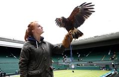 Imogen Davis poses for a photograph with Rufus, a Harris Hawk used at the Wimbledon Tennis Championships to scare away pigeons, in London June 24, 2013.     REUTERS/Eddie Keogh