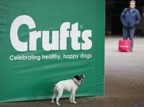 A dog poses for its owner on arrival for the first day of the Crufts Dog Show in Birmingham, central England, March 5, 2015. REUTERS/Darren Staples