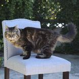 """Corduroy, the new """"oldest living cat"""" according to Guinness World Records, is shown in Sister, Oregon, in this undated handout photo provided by the Guinness World Records on August 13, 2015. REUTERS/Guinness World Book of Records/Handout via Reuters"""
