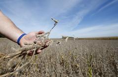 Un agricultor revisa un brote de soja en un cultivo en Minooka, EEUU, sep 24, 2014. El Departamento de Agricultura de Estados Unidos elevó sorpresivamente sus proyecciones sobre la producción doméstica de soja, en base a expectativas de rendimientos récord en importantes estados como Iowa, Minesota y Nebraska.   REUTERS/Jim Young