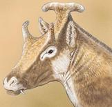 """An artist' illustration shows a reconstruction of Xenokeryx amidalae, meaning """"strange horn of Amidala,""""  in this image released on December 2, 2015.   REUTERS/Israel M. Sanchez/Handout via Reuters"""