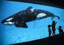 Crianças olhando orca em parque do SeaWorld em San Diego, Califórnia.  19/03/2014   REUTERS/Mike Blake