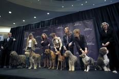 New breeds (L-R) a Bregamasco, a Berger Picard, a Boerboel, a Cirneco dell'Etna, a Lagotto Romagnolo, a Miniature American Shepard and a Spanish Water Dog stand with their handlers at a news conference to introduce the seven new breeds of dogs that will be competing in the 2016 Westminster Kennel Club Dog Show at Madison Square Garden in New York, January 21, 2016. REUTERS/Mike Segar