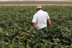 Trabalhador caminha em plantação de soja na cidade de Primavera do Leste, em Mato Grosso. 07/02/2013 REUTERS/Paulo Whitaker
