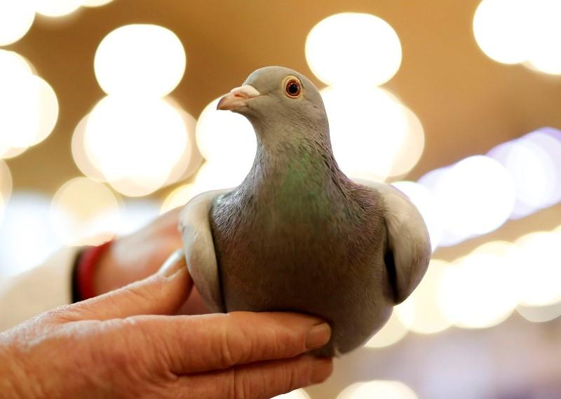 Hundreds of homing pigeons perish in New York fire - Reuters
