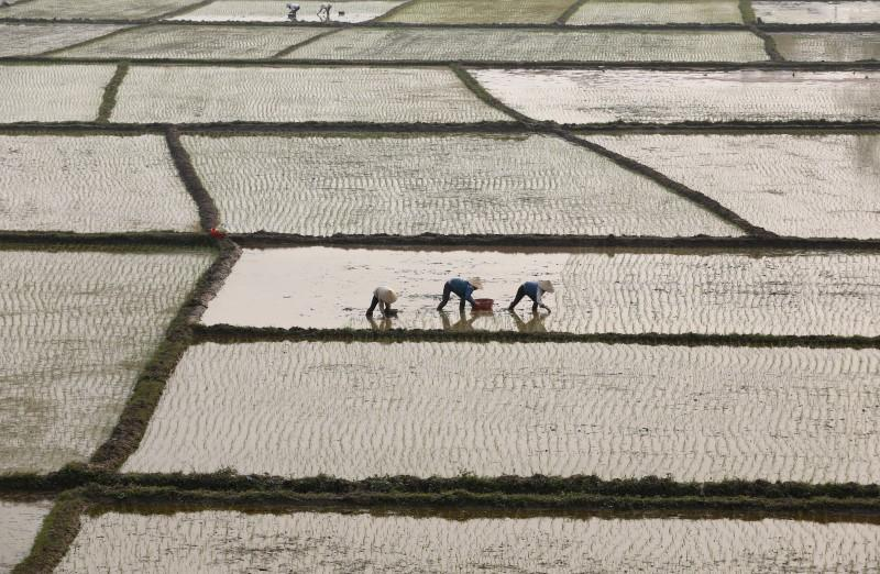 Vietnam's H1 2016 rice exports may edge up despite output fall