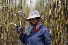 Una trabajadora en un cañaveral en Ratchaburi, Tailandia, mar 22, 2016. Los futuros del azúcar sin refinar en el mercado ICE subieron el viernes un 7 por ciento, su mayor repunte diario en dos meses, ante una previsión de déficit global revisada al alza, afirmando la prima del contrato al contado y un aluvión de señales técnicas de compra.  REUTERS/Jorge Silva