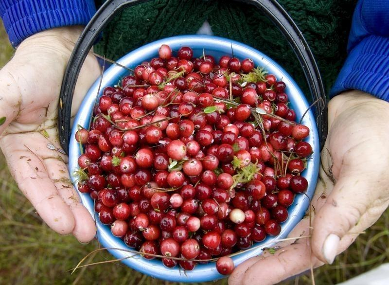 Not all cranberry supplements prevent urinary tract