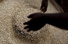 Les prix alimentaires mondiaux ont légèrement augmenté en avril, la hausse de l'huile végétale et des céréales ayant plus que compensé la baisse des produits laitiers et du sucre, selon l'indice de la FAO, l'agence des Nations unies pour l'alimentation et l'agriculture. /Photo d'archives/REUTERS/Mike Hutchings
