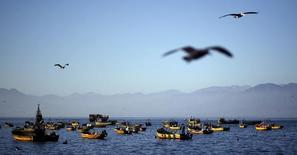 Imagen de archivo de unos pelícanos sobrevolando el puerto de Coquimbo, Chile, jun 11, 2015. La industria pesquera en Chile se encamina en 2016 a una de sus peores temporadas, golpeada con fuerza por el fenómeno climático de El Niño y el explosivo florecimiento de microalgas nocivas en las áreas del sur del país donde concentra su actividad.   REUTERS/Marcos Brindicci