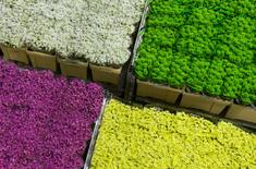 Flowers are seen at the Royal FloraHolland flower market in Aalsmeer, the Netherlands, March 16, 2016. REUTERS/Yves Herman/File Photo
