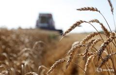 Жатва пшеницы в Ставропольском регионе. Экспортные цены российской пшеницы выросли на прошлой неделе, так как производители не спешат продавать в ожидании увеличения цен, а также на фоне укрепления рубля к доллару, говорят аналитики. REUTERS/Eduard Korniyenko