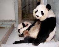 FILE PHOTO: Giant Panda Lun Lun relaxes as her twin panda cubs Mei Lun and Mei Huan sleep at her feet at the Atlanta Zoo in Atlanta, Georgia, U.S. November 14, 2013.  REUTERS/Tami Chappell/File Photo