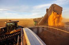 FILE PHOTO --  Wheat is dumped into a grain truck for transport on the Stephen and Brian Vandervalk farm near Fort MacLeod, Alberta, September 26, 2011.        REUTERS/Todd Korol/File Photo