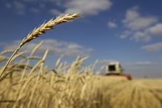 Комбайн убирает пшеницу близ города Акколь в Казахстане. 11 октября 2011 года. Казахстан, крупнейший производитель зерна в Центральной Азии, повысил прогноз экспорта зерна в нынешнем 2016-17 маркетинговом году до 8,5 миллиона тонн с прежнего прогноза в 7,0-7,5 миллиона тонн, сообщили в четверг представители Минсельхоза страны и государственного зернового трейдера Продкорпорация. REUTERS/Shamil Zhumatov