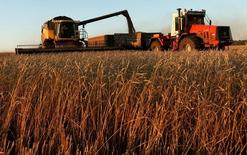 Комбайны убирают пшеницу на поле предприятия Солгонское недалеко от Красноярска.  Экспортные цены на российскую пшеницу продолжают снижаться под давлением прежних внешних факторов - слабости мировых биржевых площадок и неразрешенной ситуации с поставками в Египет, говорят аналитики. REUTERS/Ilya Naymushin