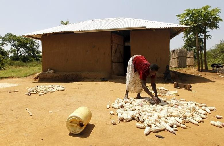 Mary Adhiambo, dries her maize in the sun outside her house in the U.S. President Barack Obama's ancestral village of Nyang'oma Kogelo, west of Kenya's capital Nairobi, July 15, 2015. REUTERS/Thomas Mukoya