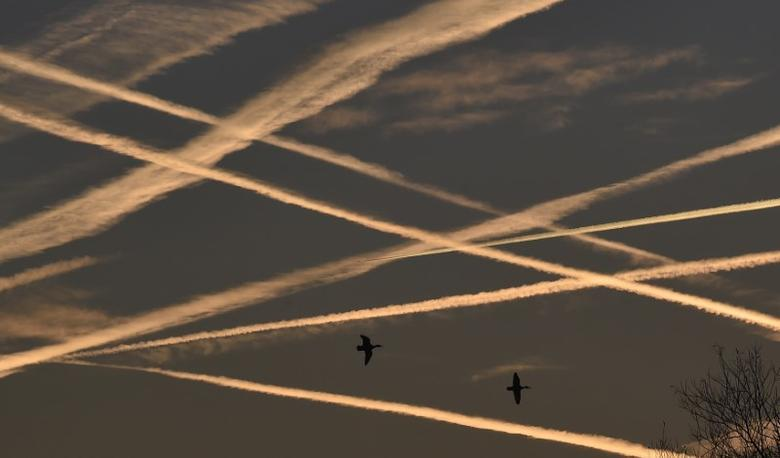Ducks fly beneath contrails in the sky at dawn in west London November 24, 2014.  REUTERS/Toby Melville