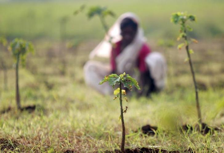A woman clears wild grass in plantation field in Malegaon, 260 km (162 miles) northeast of Mumbai, October 9, 2006. REUTERS/Prashanth Vishwanathan/Files