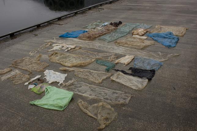 2月3日、ノルウェーで、救助できず死んだ体長6メートルのアカボウクジラの体内から、30枚のポリ袋が見つかった。包み紙やパンの袋もあったという。写真はベルゲン大学提供(2017年 ロイター)