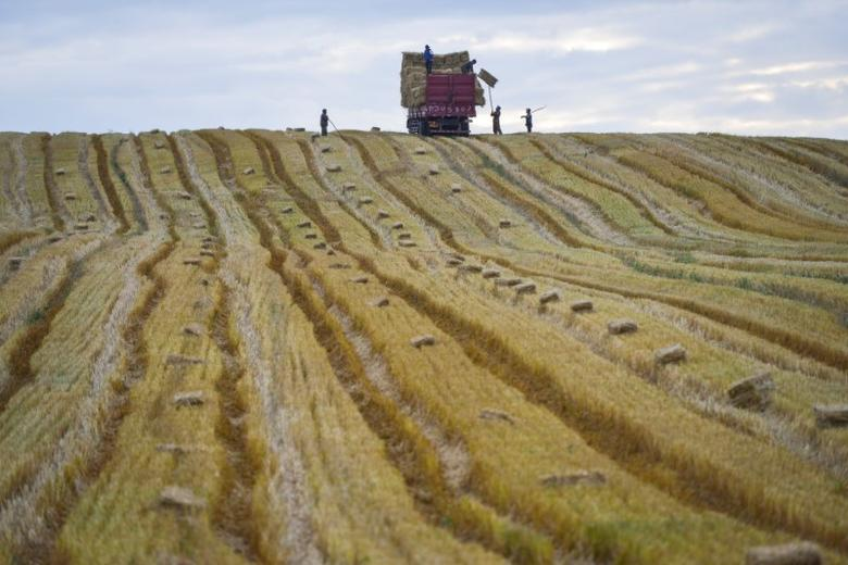 People work in the field in Yili, Xinjiang Uyghur Autonomous Region, China, September 4, 2016. China Daily/via REUTERS