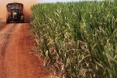 Un tractor transportando caña de azúcar en un cultivo del Grupo Moreno en Ribeirao Preto, Brasil, sep 15, 2016. Las proyecciones iniciales sobre la producción de caña 2017/2018 de Brasil varían ampliamente entre sí, ya que fuertes lluvias en la principal zona azucarera del país generan incertidumbre en los operadores sobre cuánta azúcar podrá obtener el mayor productor mundial, mientras se acerca el momento de la cosecha.  REUTERS/Nacho Doce