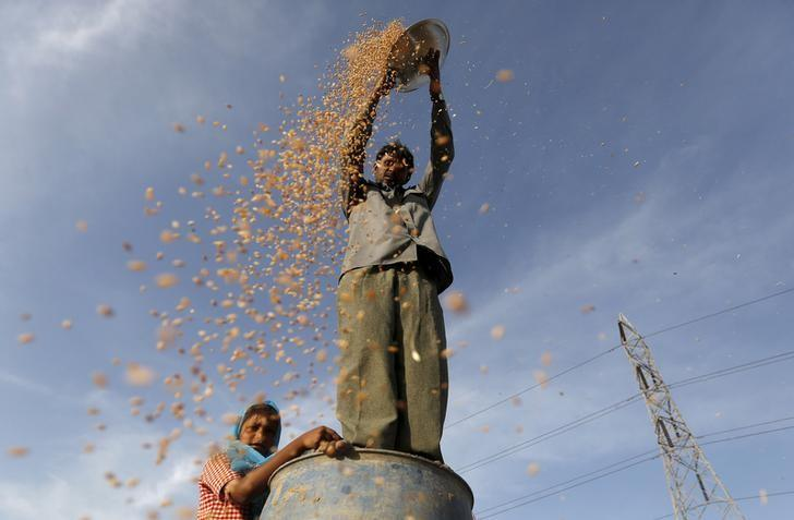 A farmer standing on a plastic drum winnows wheat in a field on the outskirts of Ahmedabad, India March 29, 2016. REUTERS/Amit Dave/Files