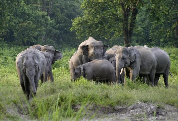 FILE PHOTO: A herd of elephants is seen in the Gorumara national park, about 100km (62 miles) north of the northeastern Indian city of Siliguri, April 26, 2007. REUTERS/Rupak De Chowdhuri/Files