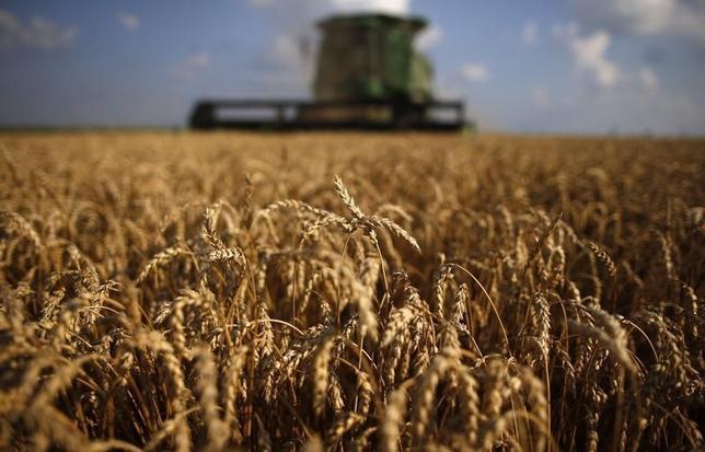 3月16日、ホワイトハウスの予算関連文書によると、トランプ米大統領は2018会計年度の予算教書で、農務省の裁量的経費の21%削減を盛り込み、国際食糧支援プログラムや農村部向け水道整備支援の廃止、郡レベルでの職員削減を提案する。写真は収穫期のソフト・レッド・ウインター小麦畑。イリノイ州ディクソンで2013年7月撮影(2017年 ロイター/Jim Young)