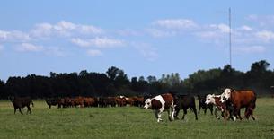 Unas vacas pastando en una granja cerca de Chascomús, Argentina, nov 10, 2016. La producción industrial de Argentina habría descendido en febrero un 1,2 por ciento promedio en la medición interanual, afectada principalmente por la menor actividad del agro y de la industria automotriz, según un sondeo de Reuters publicado el martes.   REUTERS/Marcos Brindicci