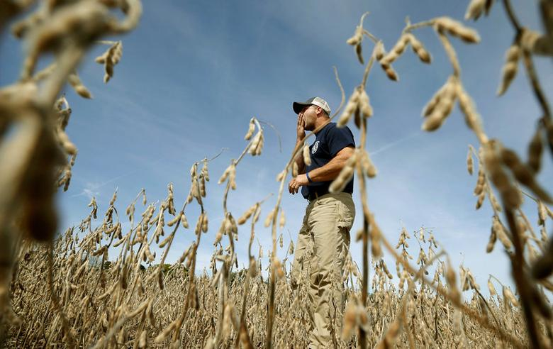 FILE PHOTO -- Ryan Roberts eats some of the soy beans in his field to check if they are ready for harvest in Minooka, Illinois, September 24, 2014. REUTERS/Jim Young/File Photo