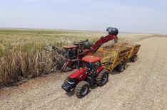Un campo de caña de azúcar es cosechado en Valparaiso en Brasil. 18 de septiembre de 2014. Las políticas proteccionistas que pesan sobre el negocio del azúcar impiden desarrollarlo de forma competitiva en Argentina, uno de los mayores productores agrícolas del mundo, dijo el jueves el presidente ejecutivo de Adecoagro SA. REUTERS/Paulo Whitaker
