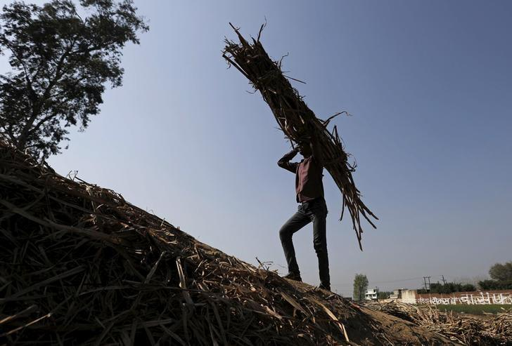 A worker carries a bundle of sugarcane on his head at a farmland near Modinagar in the northern Indian state of Uttar Pradesh, India, March 4, 2016. REUTERS/Anindito Mukherjee/File Photo