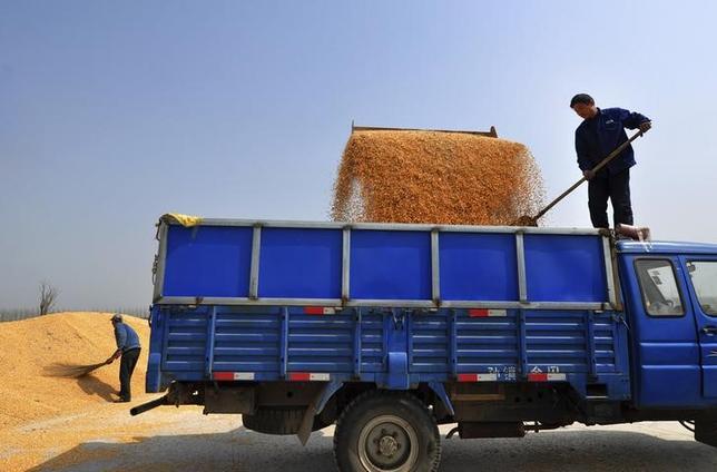 4月17日、中国国家統計局の調査によると、国内の大豆作付面積は今年、8.1%拡大する見通し。一方、トウモロコシ作付面積は4%縮小する。写真はトウモロコシをトラックへ積み込む作業者たち。山東省で2013年3月撮影(2017年 ロイター/Stringer)