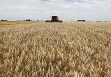 Una cosechadora recoge la producción de trigo en un campo de General Belgrano, en Buenos Aires, Argentina.b La producción argentina de trigo crecerá a 17,5 millones de toneladas en la temporada 2017/18 desde los 16,3 millones de la campaña previa gracias a que su área se expandirá por los mejores precios internacionales y el clima favorable, dijo el miércoles la Bolsa de Cereales de Buenos Aires. REUTERS/Enrique Marcarian