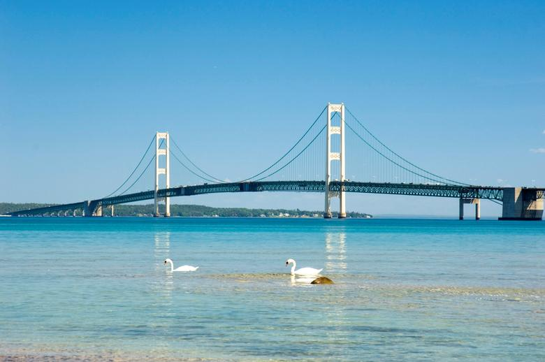 FILE PHOTO: Swans paddle near the Mackinac Bridge, spanning the Straits of Mackinac which connect two of the Great Lakes, Lake Michigan and Lake Huron, in Mackinaw, Michigan, U.S. in  June 2006.   Tim Burke/Michigan Department of Transportation/Handout via REUTERS/File Photo